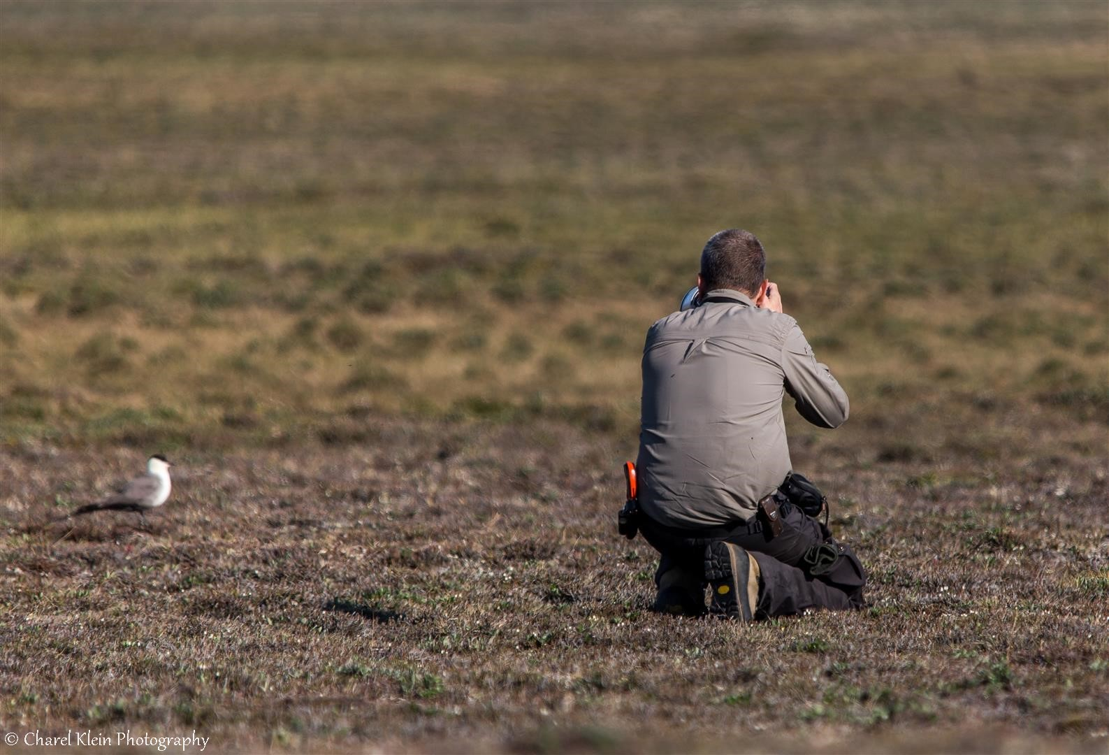 Photographing long-tailed skuas