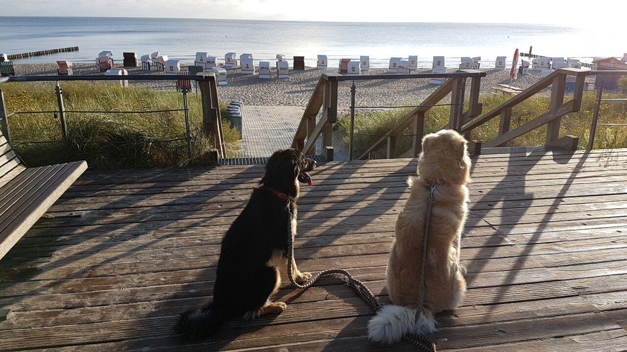 Emy mit Freund Dino an der Ostsee