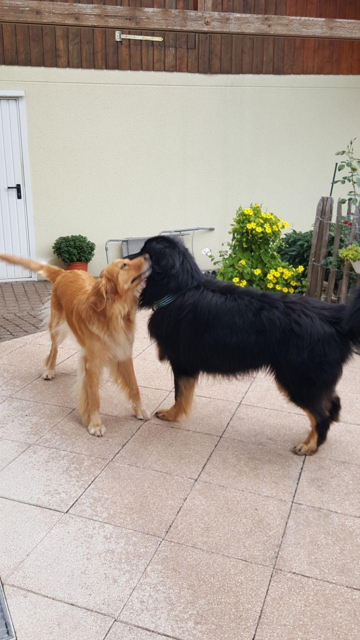 Asco und Banja