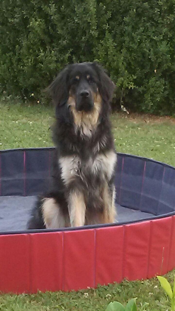 Eyck testet seinen Pool schon mal