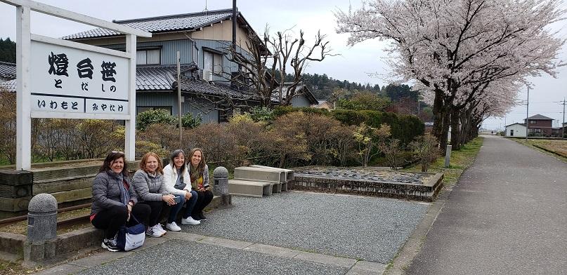 灯台笹 桜も沢山見ることができました