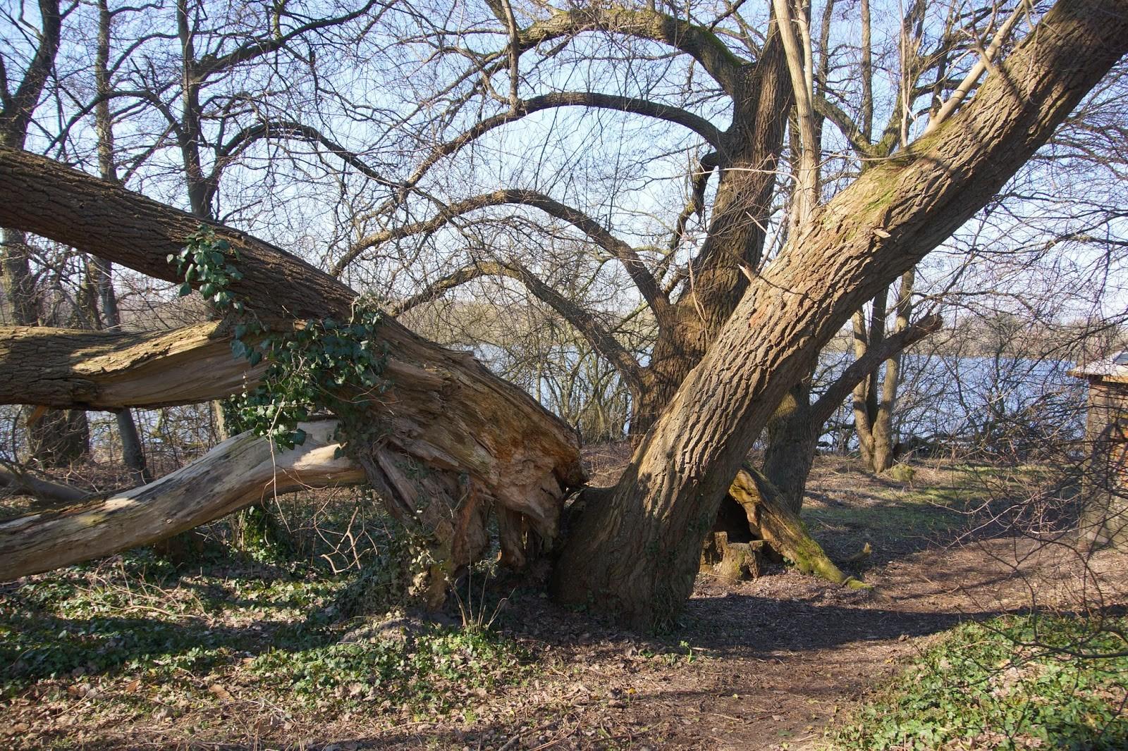 Urige Bäume säumen das Seeufer.