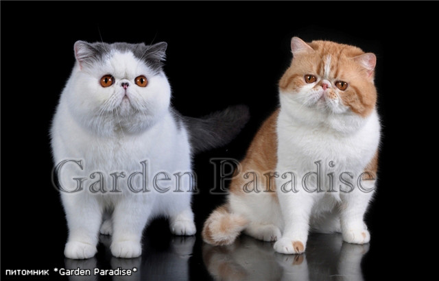 CAT`STUDIO ALVIS and MALINKA FARAON