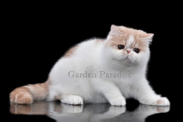 GARDEN PARADISE YANTAR