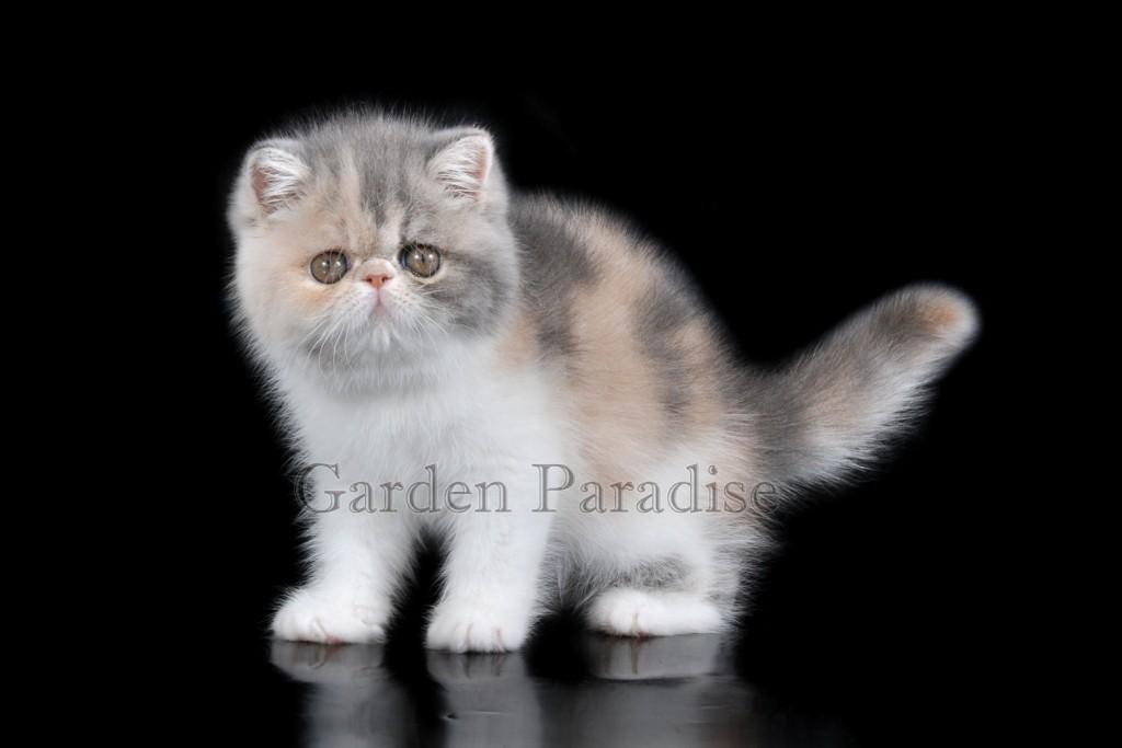 GARDEN PARADISE СARAMEL