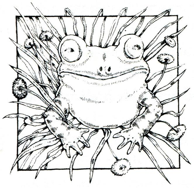 """Frosch aus """"Der Prinz vom Teich"""" Verlag Sauerländer - klassische Federzeichnung"""