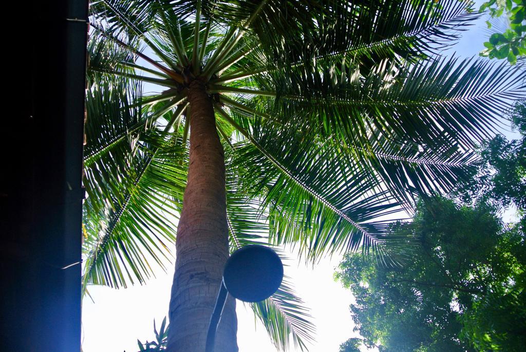The Jerry Cabana / Palm Tree Shower