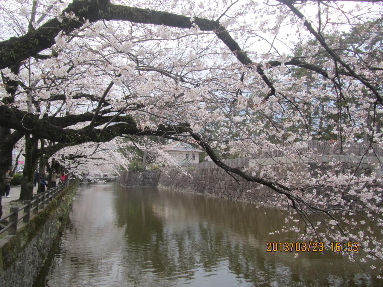 秀吉に切腹させられた北条氏の武将達の無念さを想像しながら、美しい桜を眺めるのも感慨深いものです。