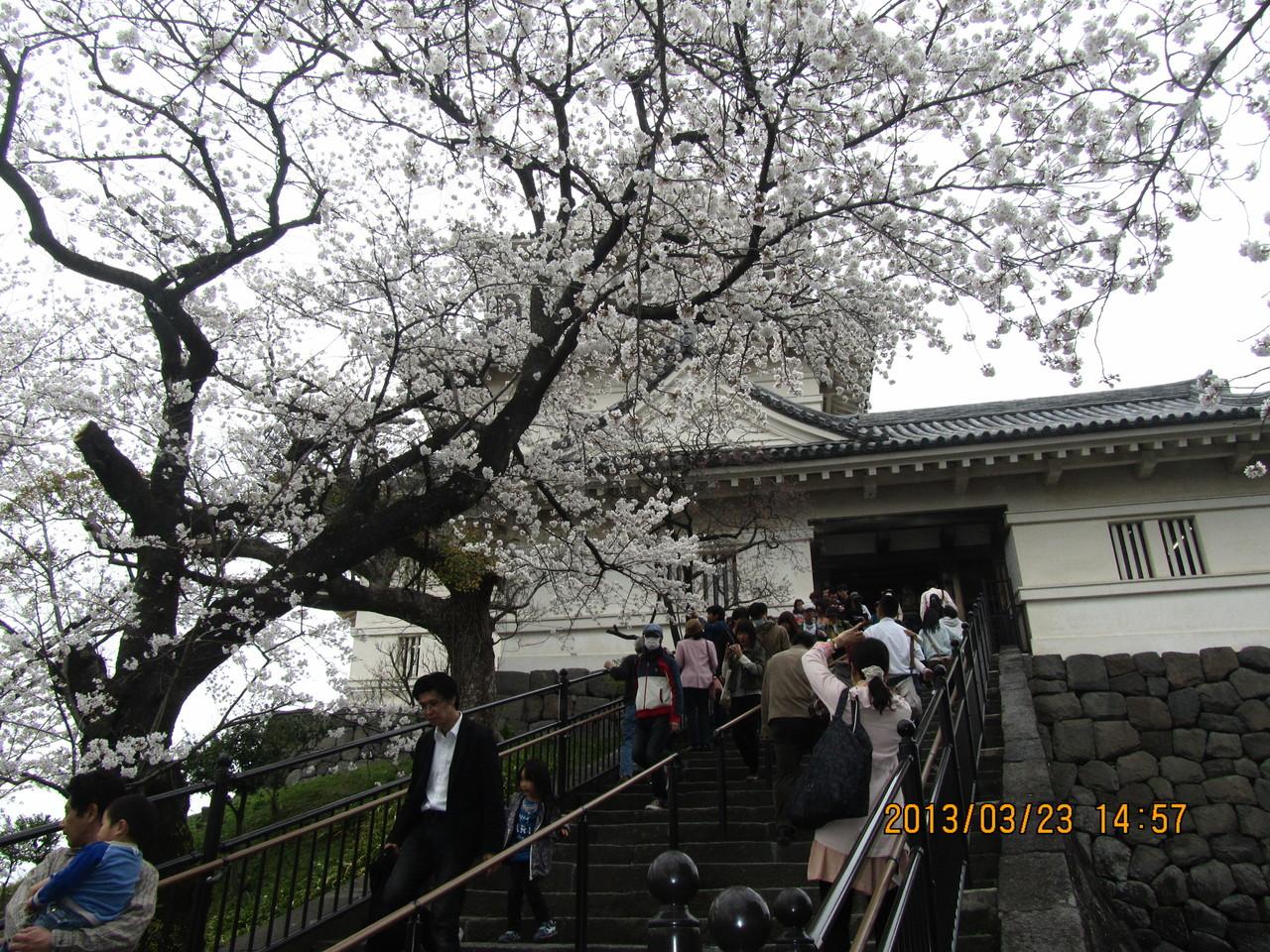 小田原城は豊臣秀吉に攻められました。