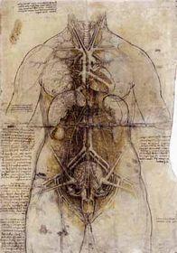 レオナルドの解剖図
