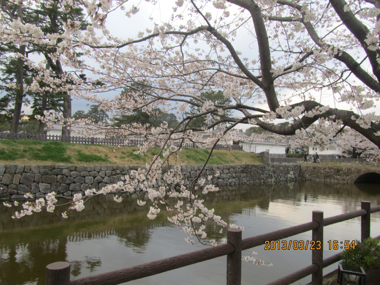 桜の花びらの淡い色彩と、潔く散っていく様(さま)は、まるで戦国武将のはかない命を投影しているようです。