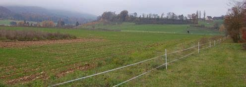 Hundefreie Zone mit dünn gesätem Getreide und inselförmiger Brache [ Foto HOPP HASE c/o Hintermann & Weber AG ! Hasenpost Rundbrief Nummer 7 ! 06.12.2011]