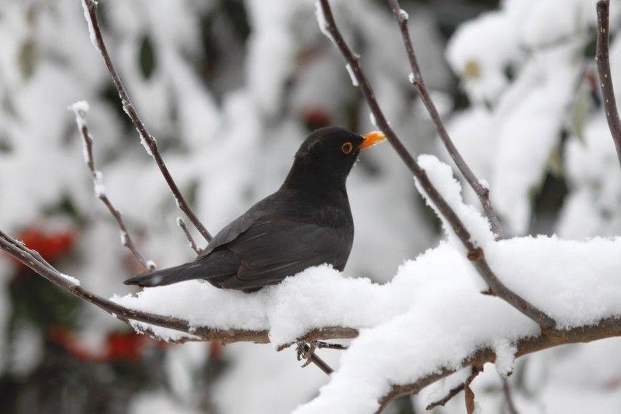 In arrivo i giorni della Merla. Tradizioni popolari nei giorni invernali più freddi