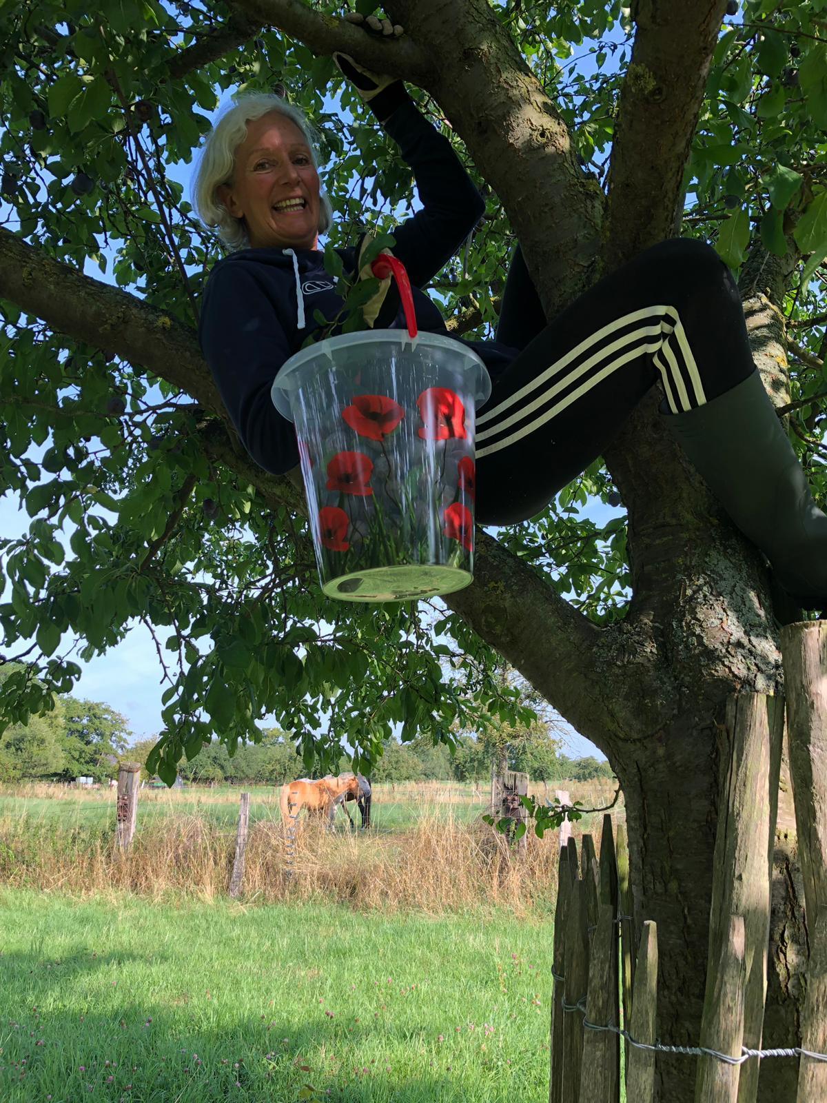 Elke klettert in den Pflaumenbaum. Foto: Elke Schönartz