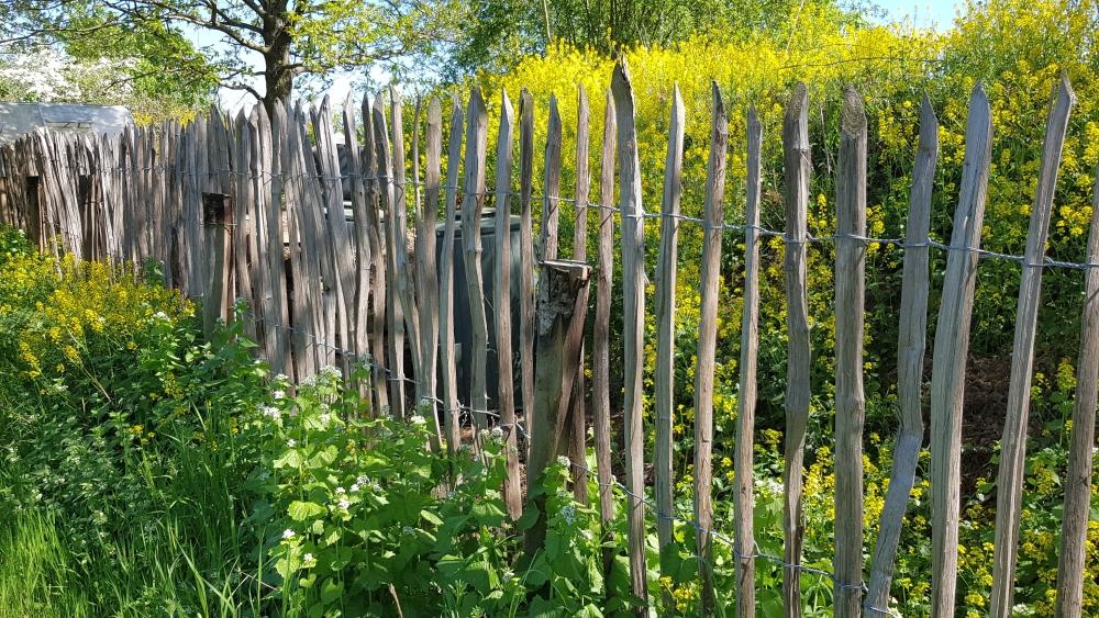 NABU Rhein-Erft: Bilder aus dem NABUnten Garten im Umweltzentrum Friesheimer Busch (Steffi Krieg]