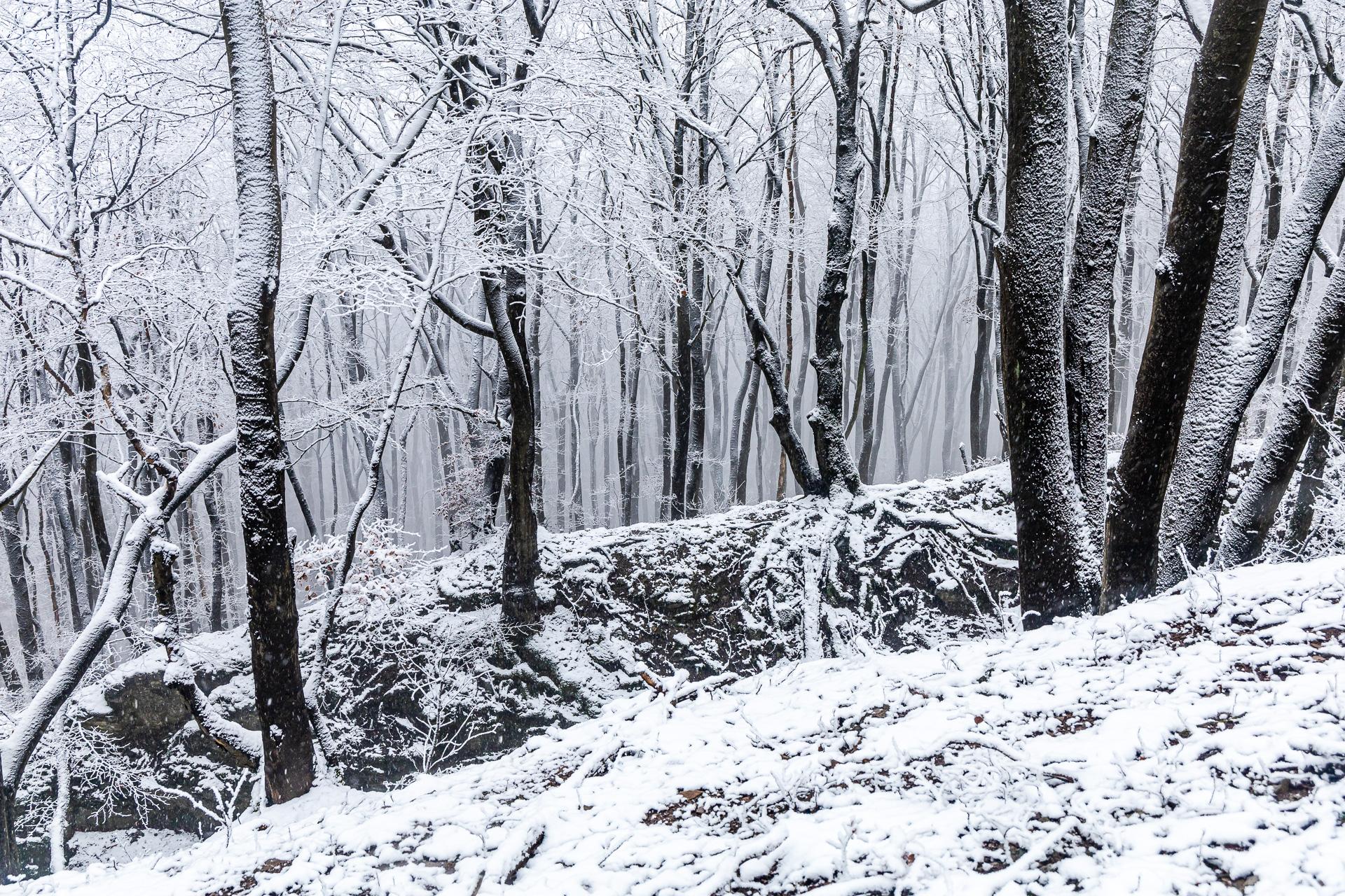 Schneelandschaften auf dem Wesergebirge