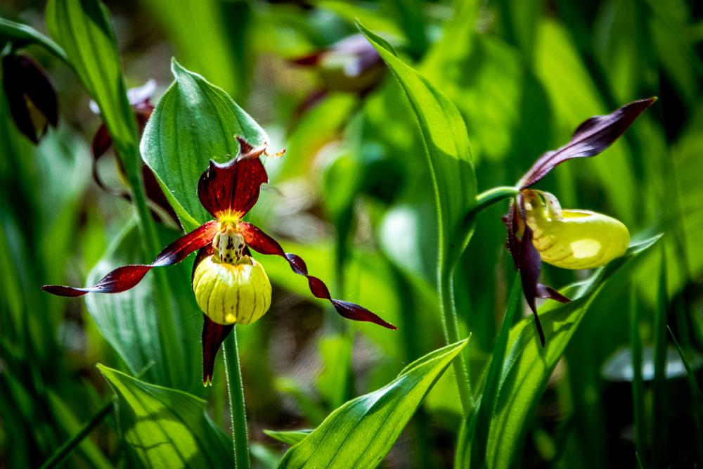 Burgbergtour mit Orchideenwiese