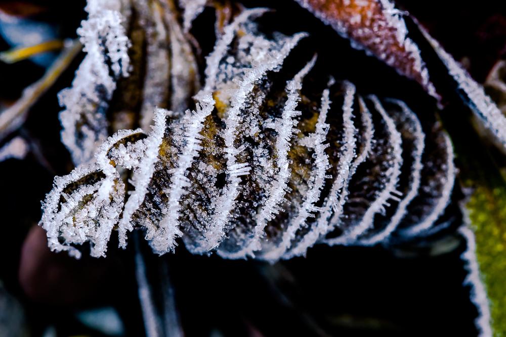 Eiskristalle nach einer frostigen Nacht