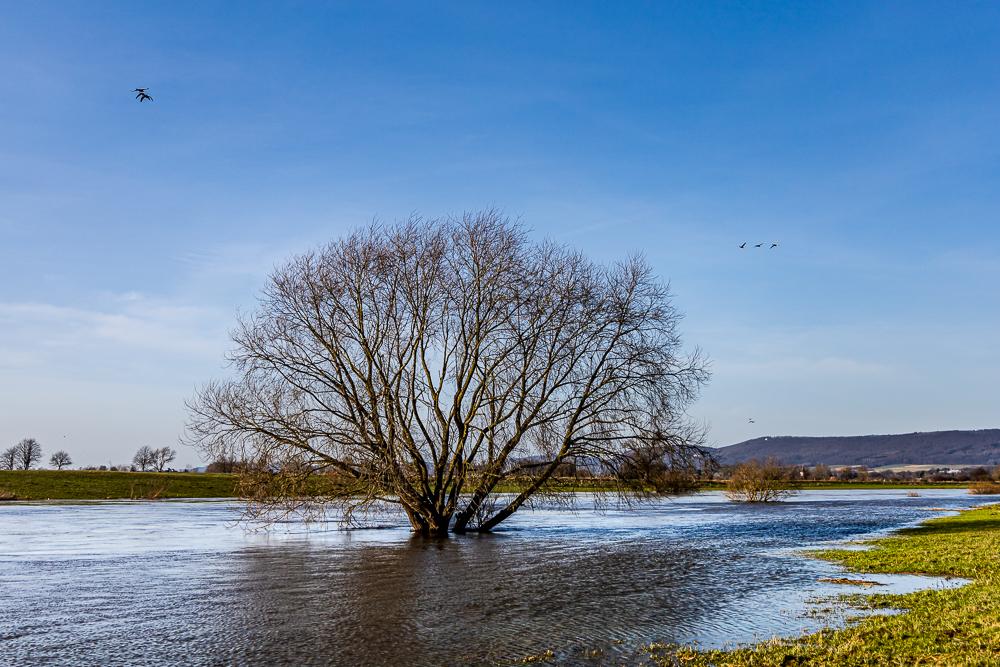 Hochwasser am Weserufer