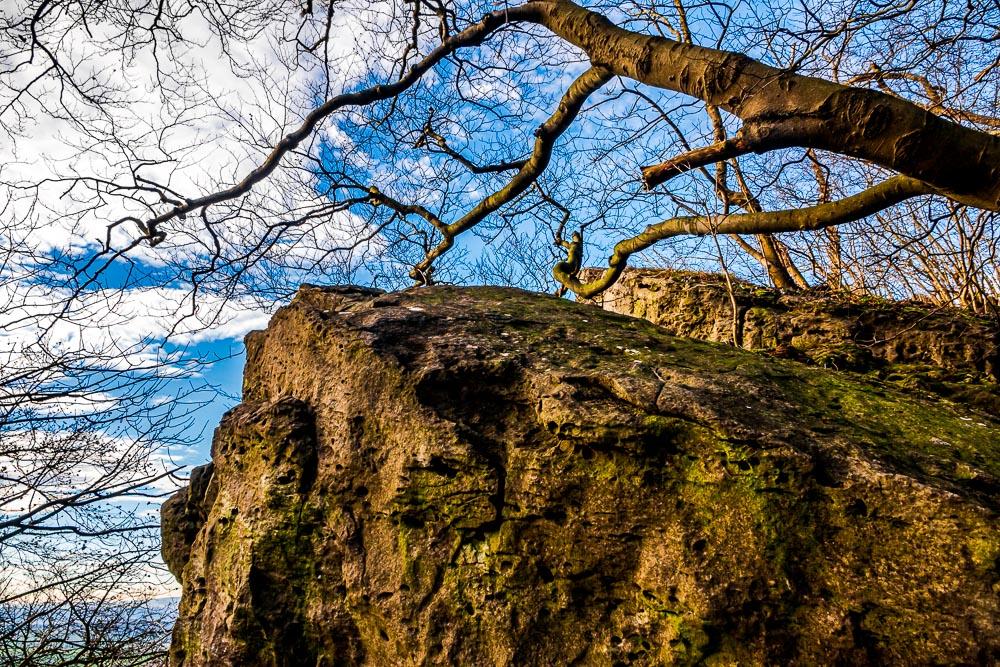 Ithkamm-Höhenweg mit Wasserbaum Ockensen