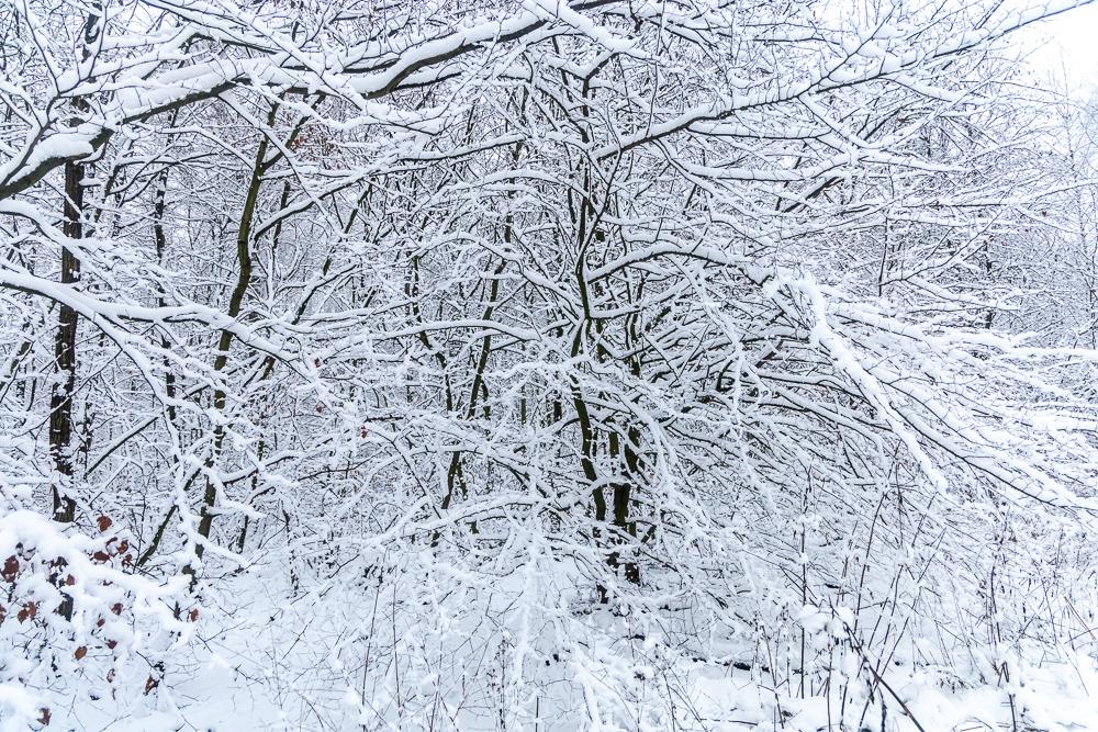 Schneelandschaft im Süntel