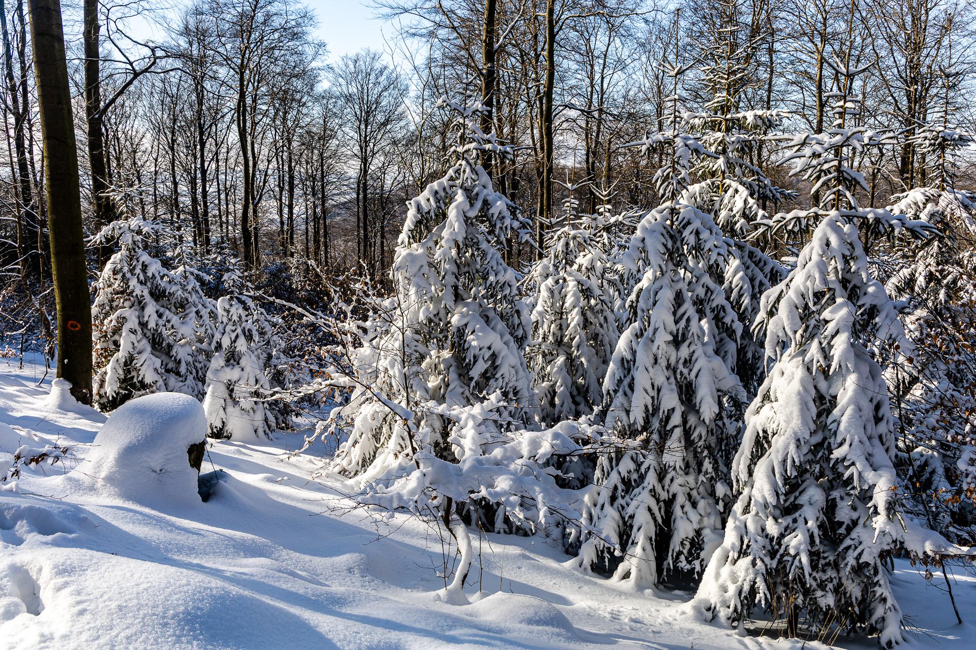 Schneewanderung zum Süntelturm