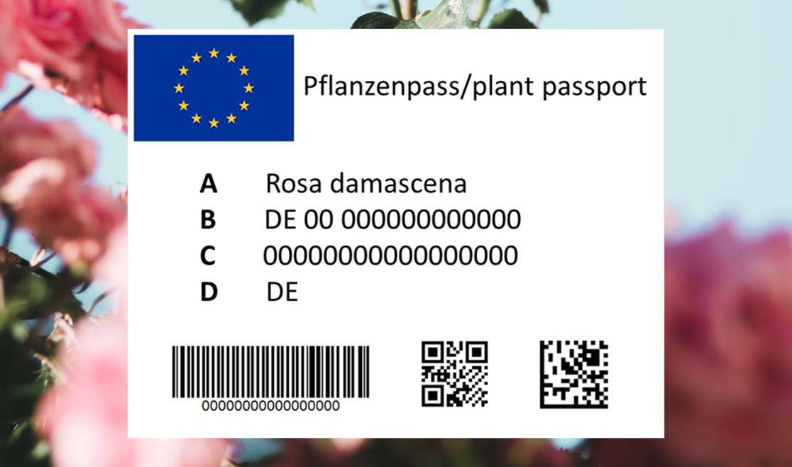 Etikettenguide: der neue EU-Pflanzenpass