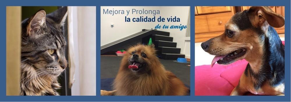 Marta Foulquié rehabilitación veterinaria