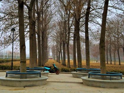 Paulownia Park