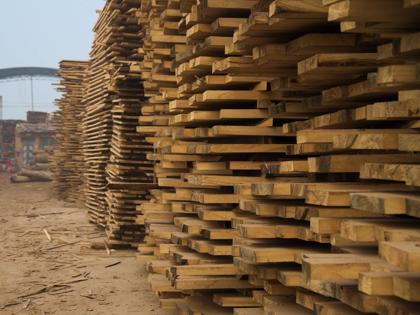 Paulownia-Holz