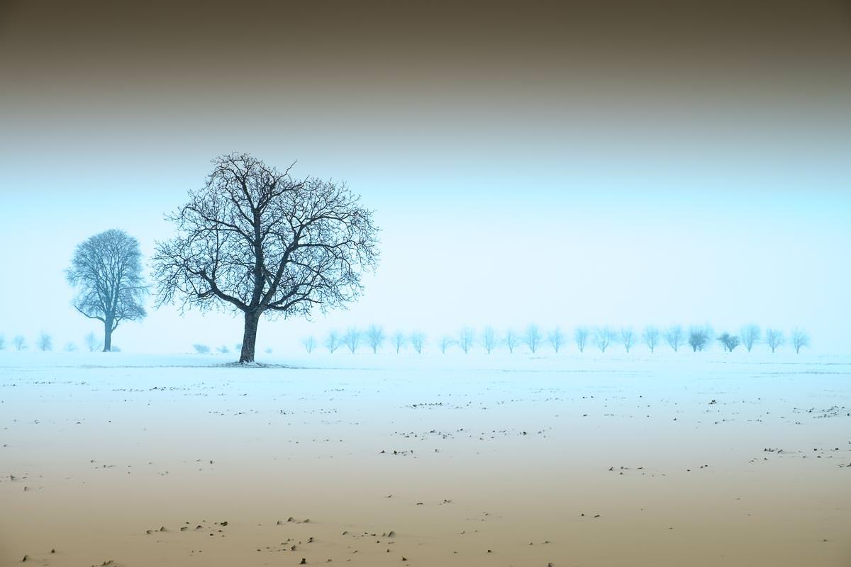 Feld im Winter bei Schneesturm mit Walnussbäumen und Allee