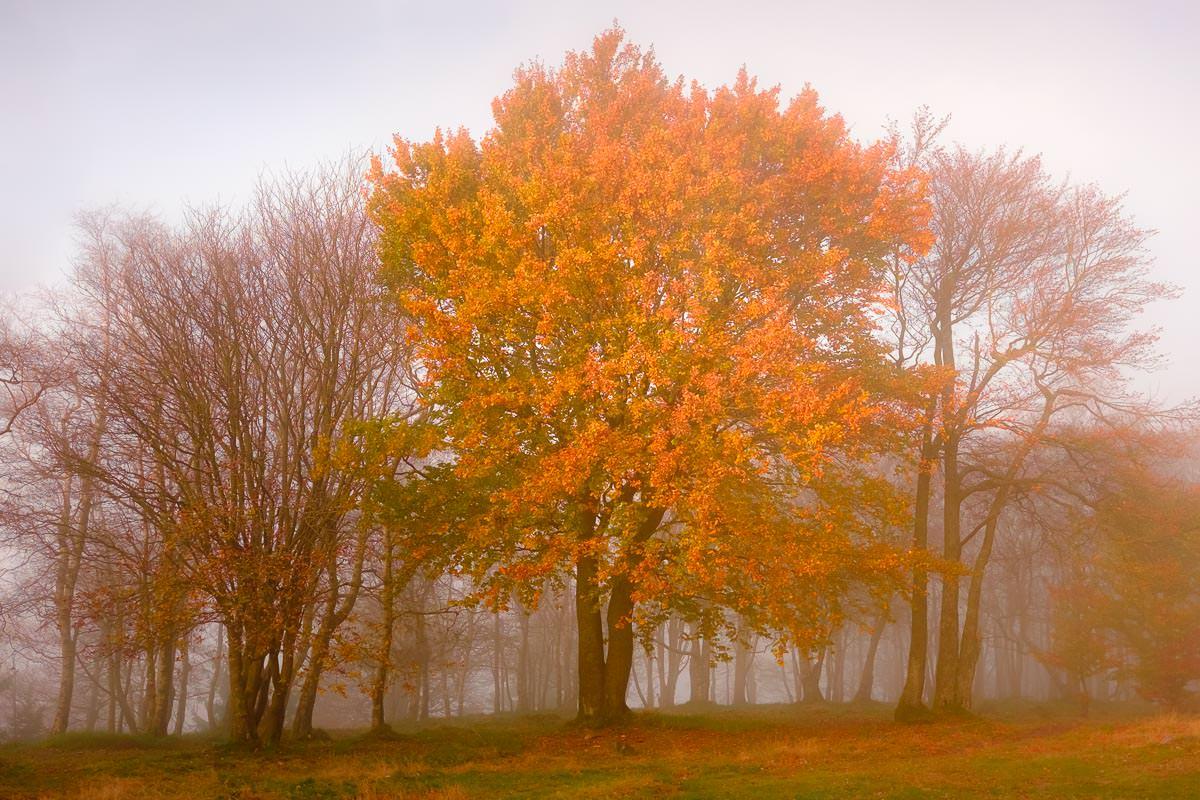 Herbststimmung auf dem Gipfel des Altkönig