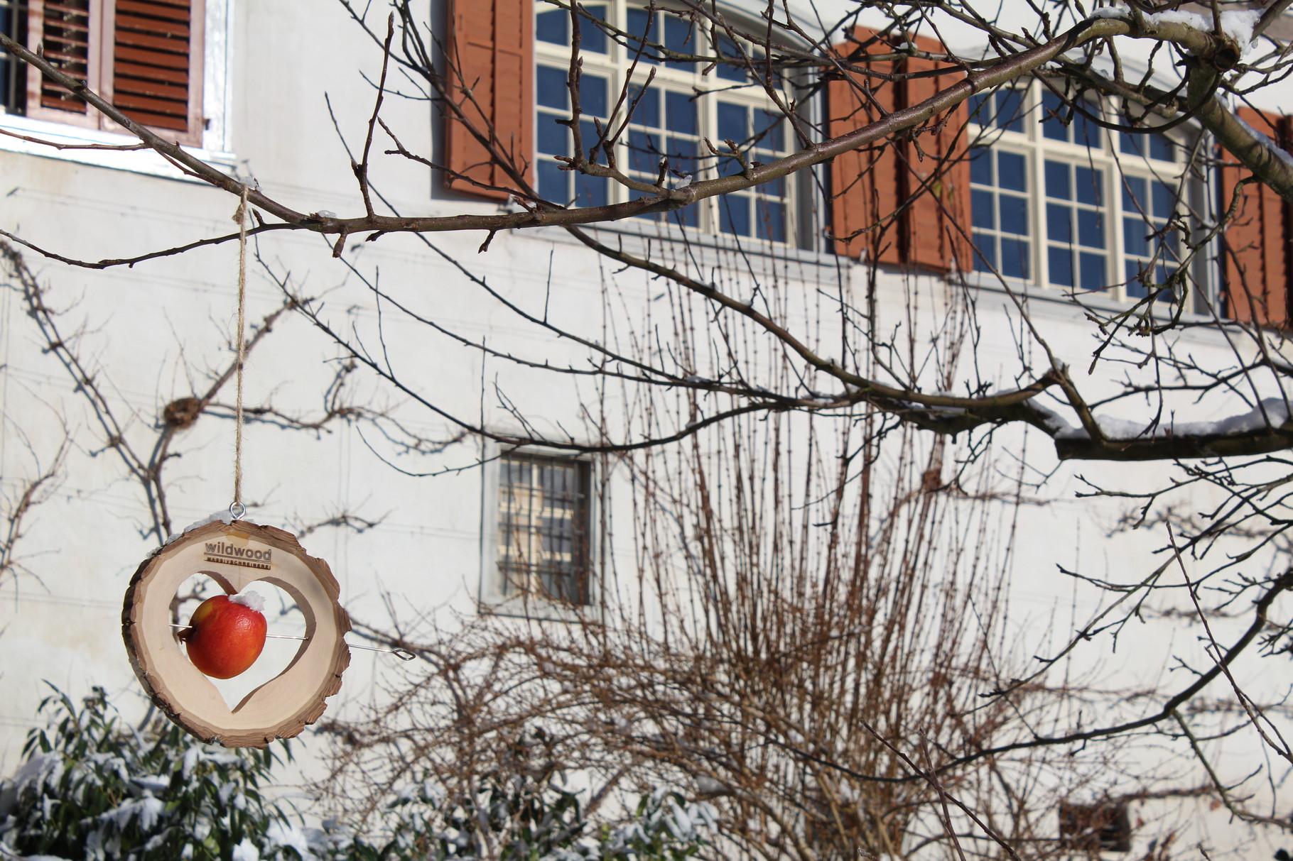 Ein Apfel hängt für die Vögel am Apfelbaum im Winter
