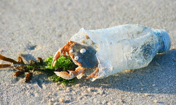 Quelle: www.umweltbundesamt.de / 7 Punkte Plan für weniger Müll im Meer