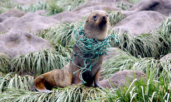 Fotoquelle: www.ecowatch.com | Claire Waluda
