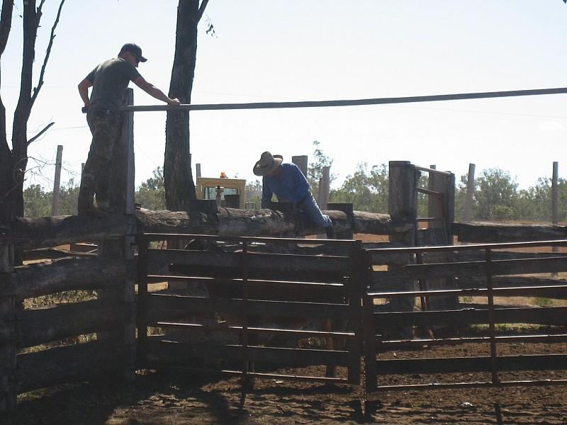 die Kuh wollte nicht so wie die anderen ;-)