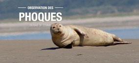 observation-phoques-baie-de-somme-cote-picarde-pointe-hourdel-hauts-de-france