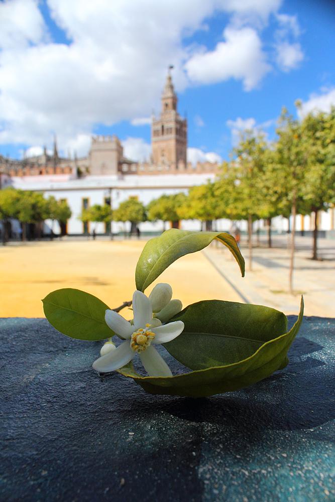 Севилья, Андалусия