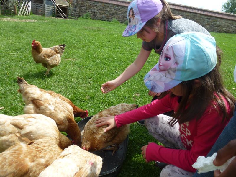 Les animaux de notre ferme pédagogique aiment recevoir les enfants