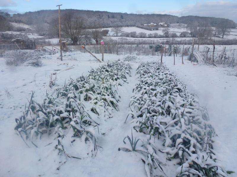 Les poireaux du jardin
