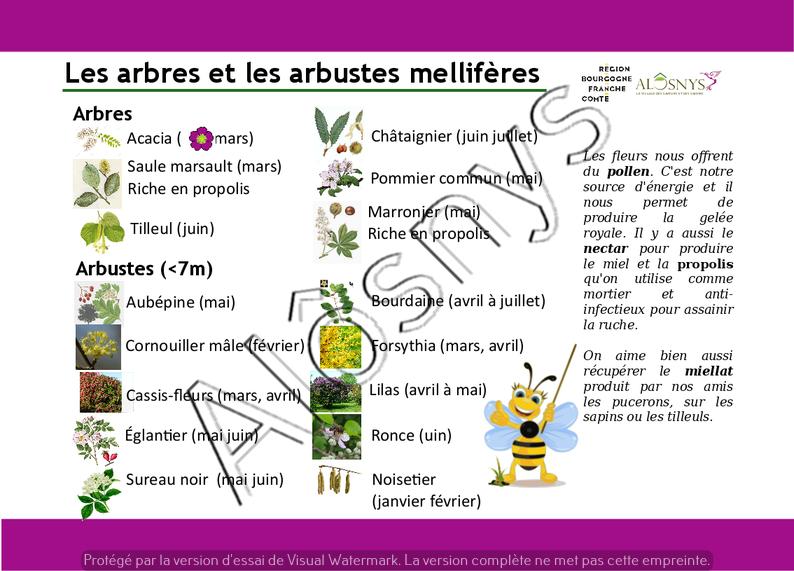 Panneau pédagogique : arbres et arbustes mellifères