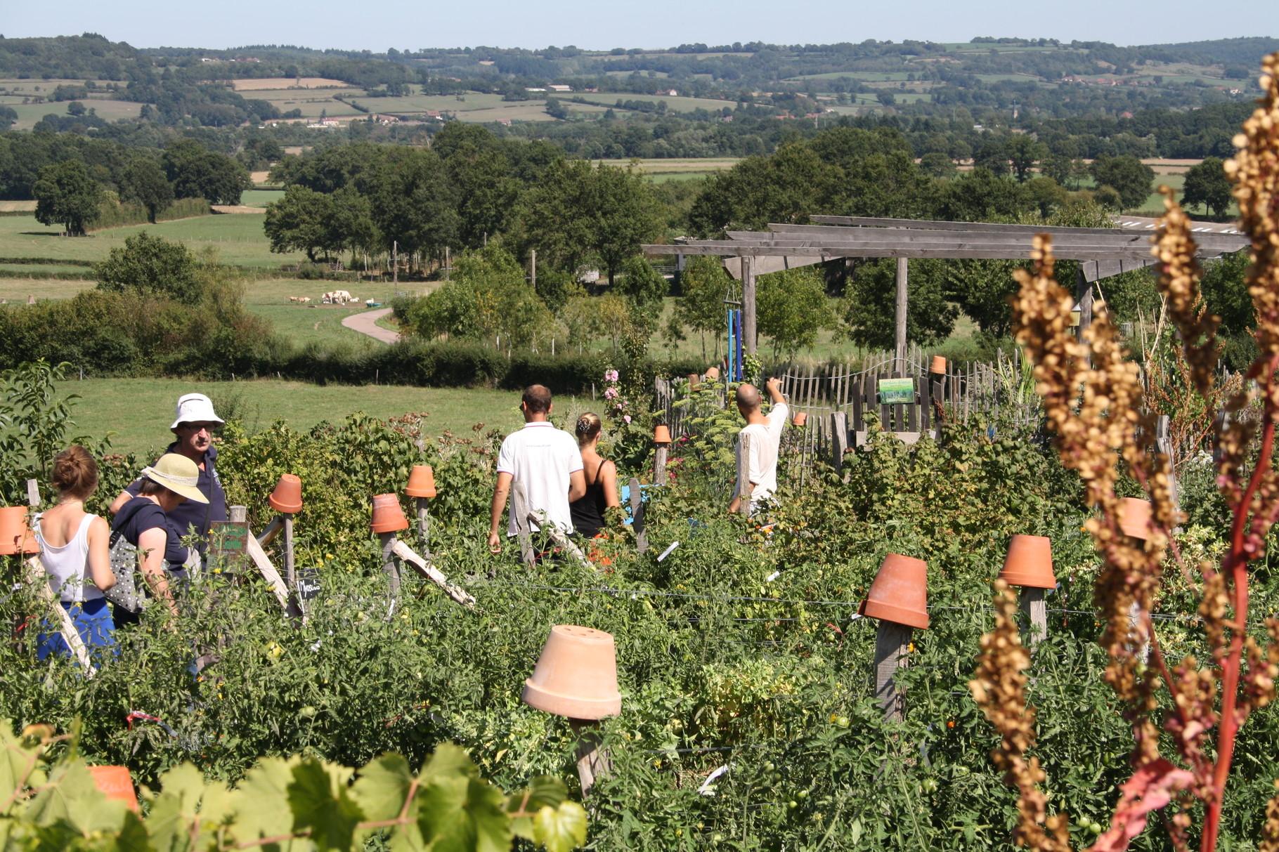 Visite guidée d'un jardin permaculture