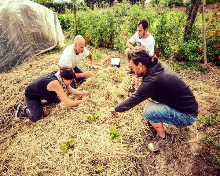 Apprenez à jardiner lors d'une formation permaculture avec notre maraicher expérimenté Bruno