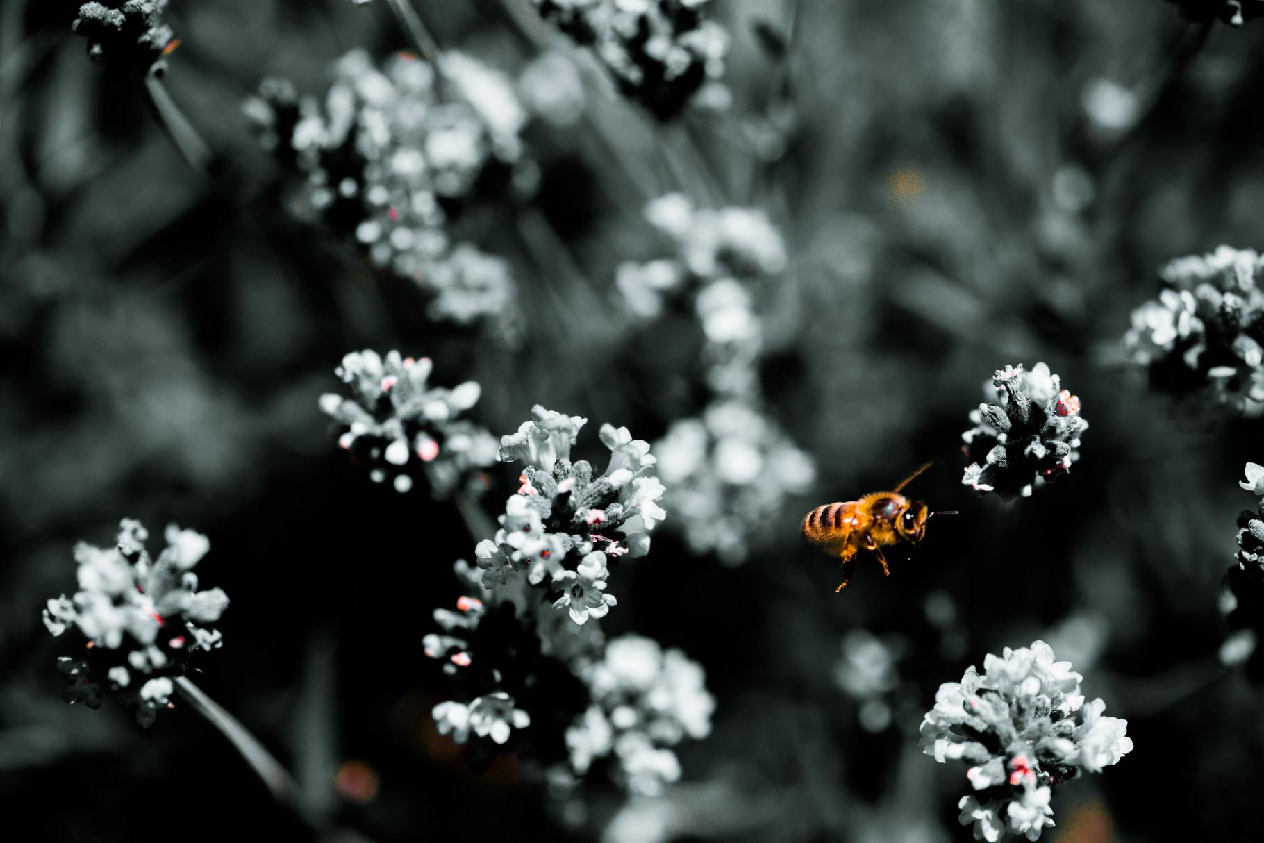 Les abeilles dans un jardin permaculture