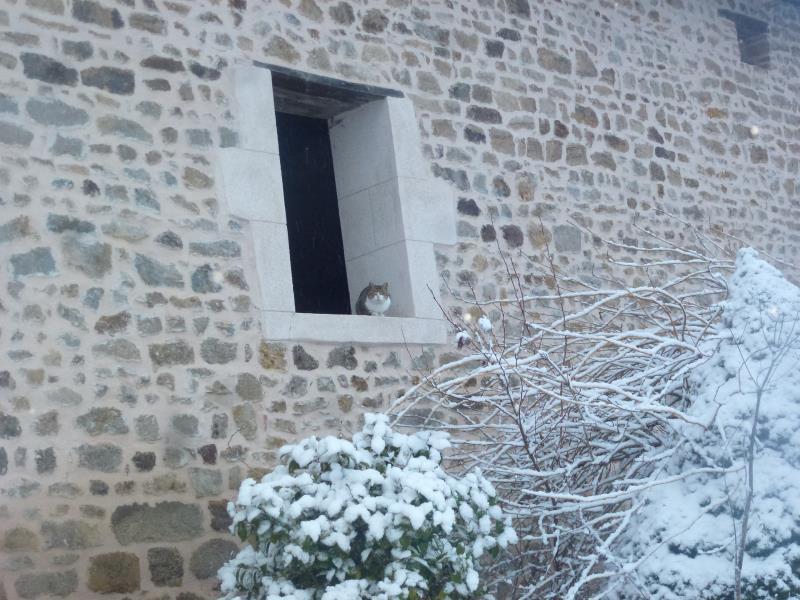 Pantouffle, le chat pédagogique