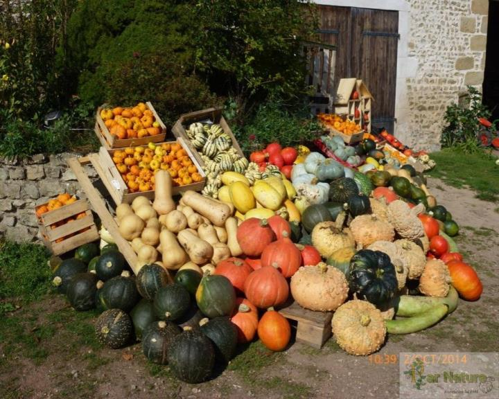 Cueillez votre panier bio de légumes au jardin  riche en biodiversité
