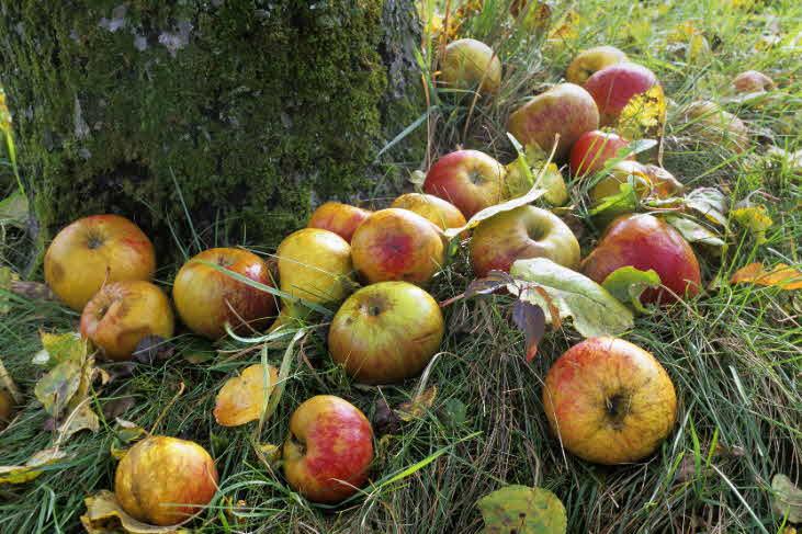 Äpfel.Foto NABU B.E.