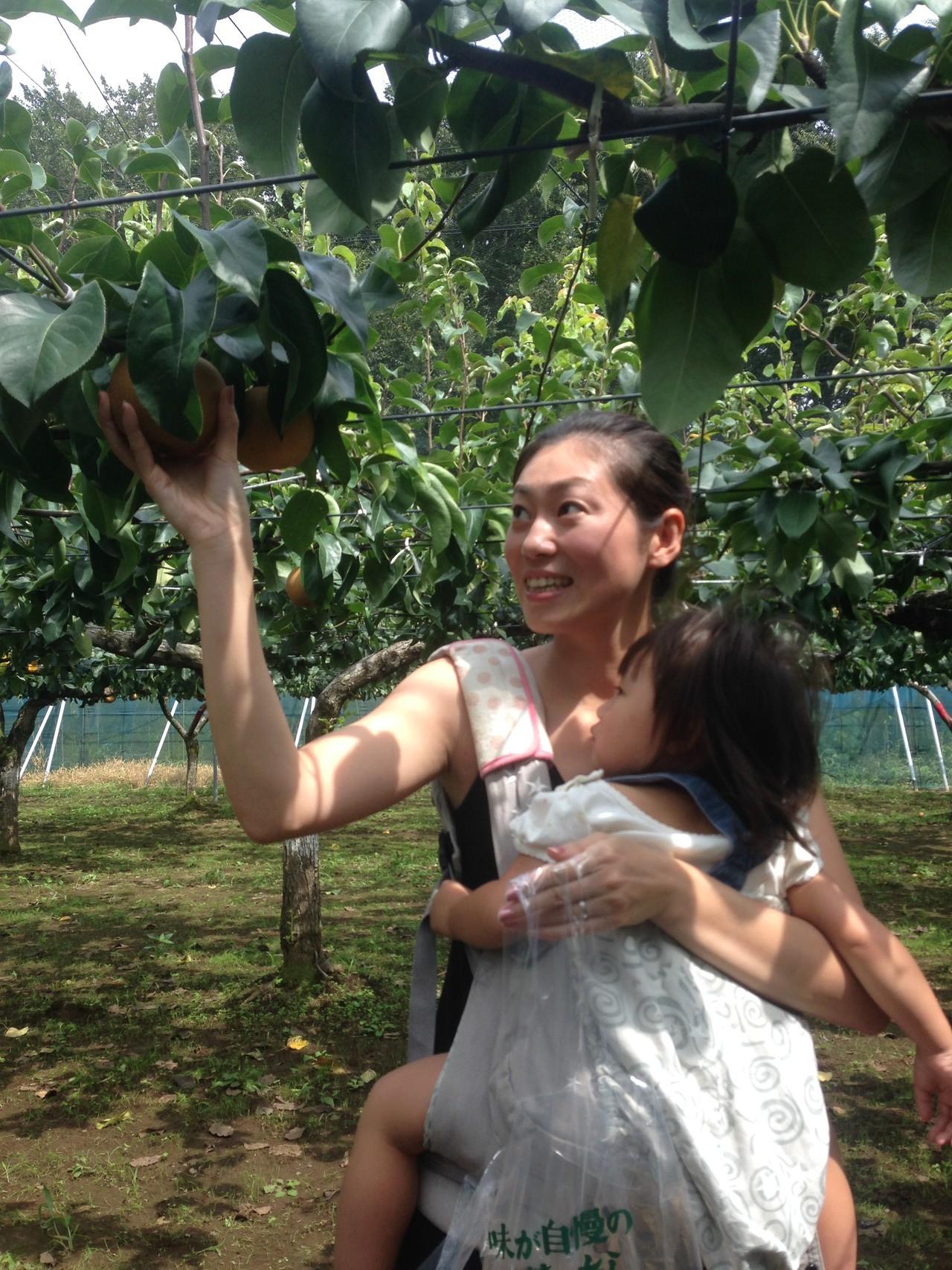 梨狩りの様子