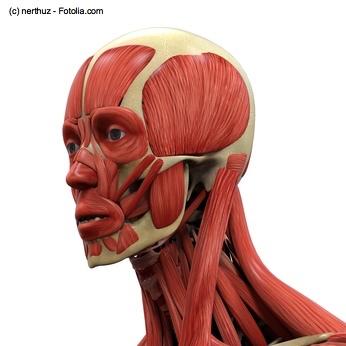 Die menschliche Kopf- und Halsmuskulatur