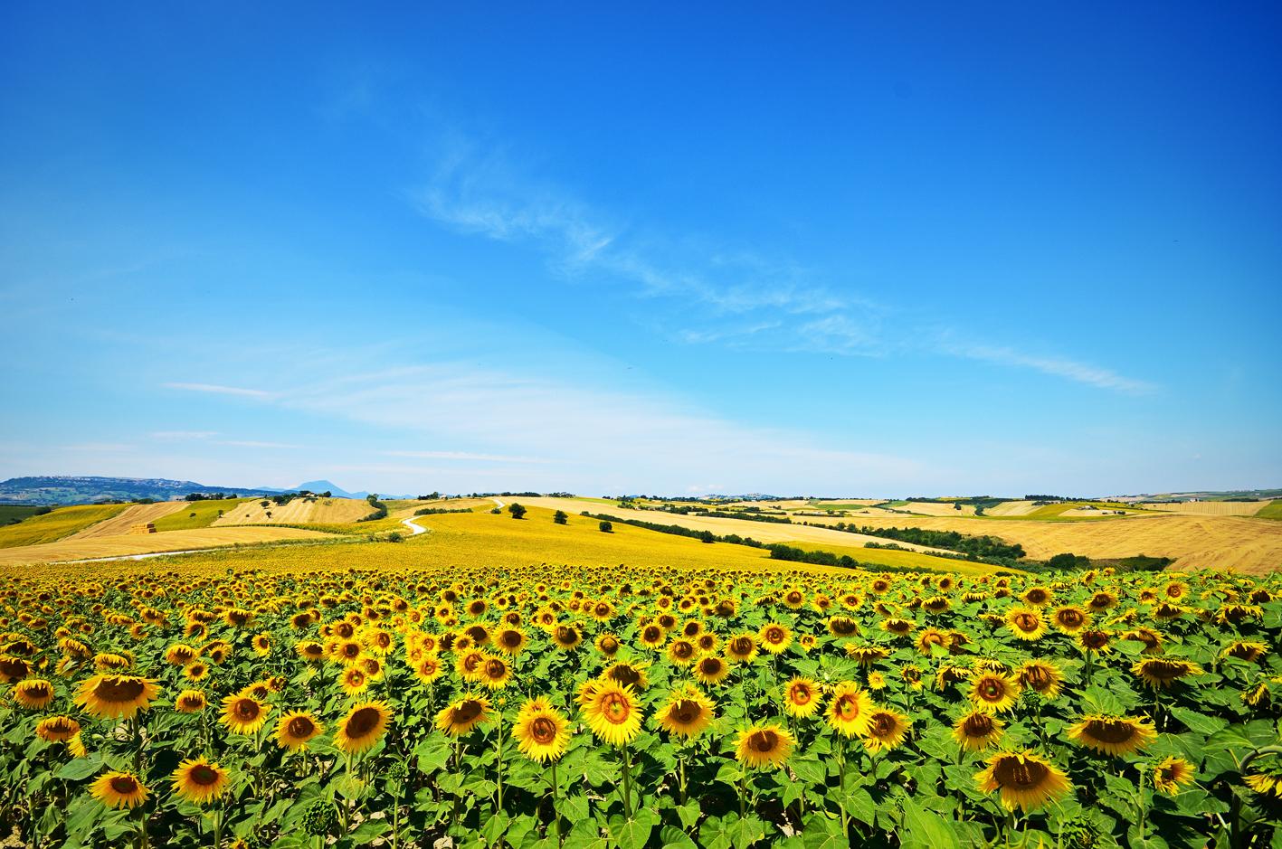 Borgo della Spiga - eine Nacht im Sonnenblumenfeld